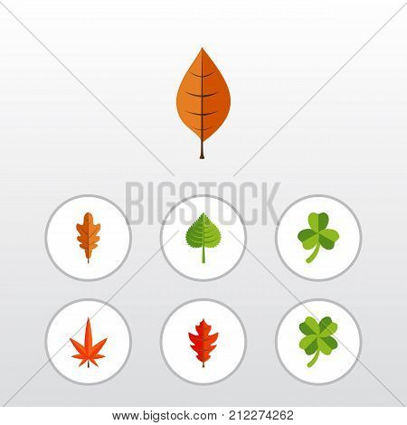 Flat Icon Leaves Set Of Aspen, Frond, Hickory And Other Vector Objects