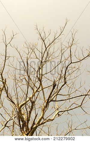 Abstract Of The Dead Trees Branch With Sky Background