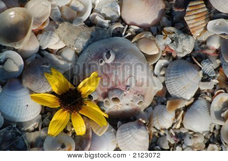 Yellow Flower In The Shells
