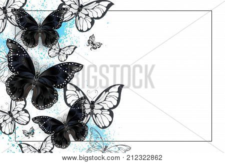 White background with black and white butterflies on a white stained blue paint background. Design with butterflies. Black butterfly.