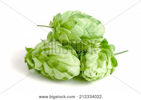 hop cones isolated on white background close-up.