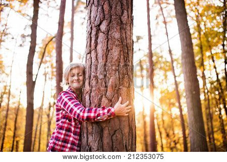 Active senior woman on a walk in a beautiful autumn forest. Tree hugger.