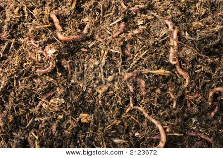 Worms In Compost/Soil