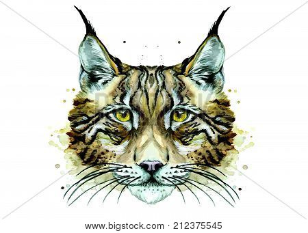 watercolor drawing of an animal mammal predator lynx, winter lynx, predator portrait, cat, vector illustration, white background for decoration