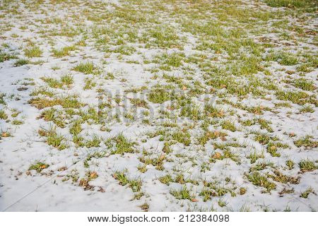 Lawn Grass Under Snow. A Lawn In Snow. Grass In The Winter.