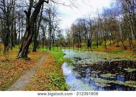 Covered with a duckweed pond in the park in the estate of Count Leo Tolstoy in Yasnaya Polyana.
