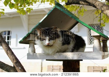 The cat sits in a bird feeder in the park in the estate of Count Leo Tolstoy in Yasnaya Polyana.