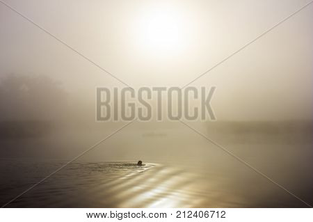 Autumn mysterious landscape. Man swims in morning mist. Sepia color. Healthy lifestyle