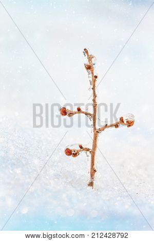 frozen branches with buds