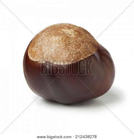 Single  Horse chestnut, Aesculus hippocastanum, on white background