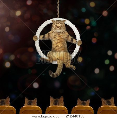 The cat acrobat sits inside a suspended ring in the circus.