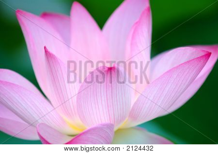 A blooming lotus flower over green background poster