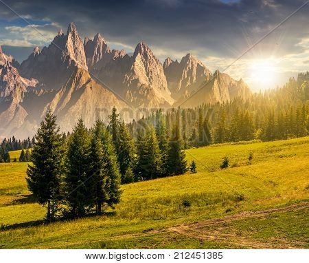 Spruce Trees On Hillside In Mountains At Sunset