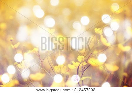 Flare soft focus. Blurry view. Blurred and de focused yellow blossom and green stalks leaves for background.