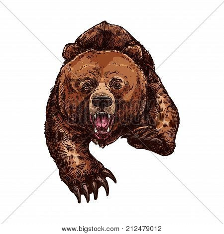 Grizzly bear roaring and attacking wild animal sketch vector icon. Wild forest bear wildlife fauna and zoology symbol for hunting sport team trophy and nature adventure club poster