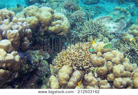 Underwater landscape with tropical fish. Coral seabottom. Exotic island shallow water wildlife. Seashore landscape underwater photo. Coral reef life. Sea nature. Sea fish in coral. Coral landscape