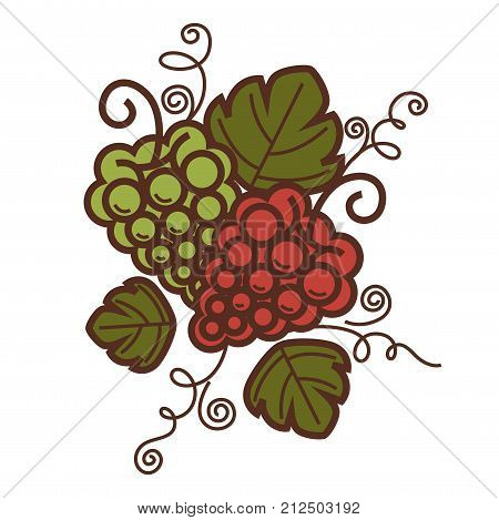 Grape vine vintage harvest icon for winemaking or wine production design. Vector symbol of viticulture winery and vineyard