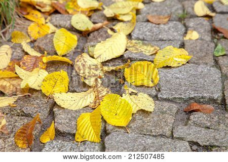 Dry fallen Colorful autumn leaves on paving slabs in sunlight in a beautiful autumn park. Season concept. Forest road background. Yellow, orange and red autumn leaves. Wet after rain. rainy weather.