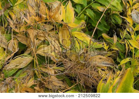 yellow plant waste close up view gardening organic