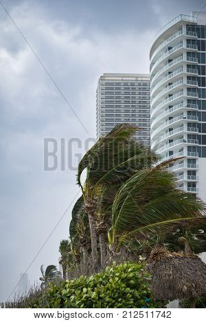 Palm trees bending with the strong wind on high buildings background. Coconut palm trees blowing in the winds before a power beach storm or hurricane