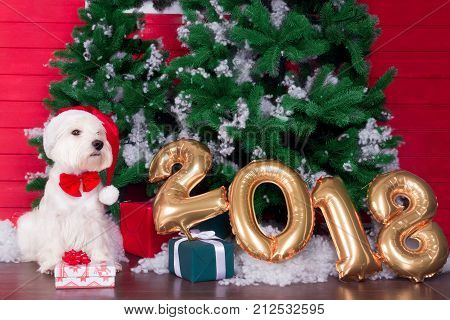 Decorated west highland white terrier dog as symbol of 2018 New Year with red bow tie decorative bows and santa hat and green christmas pine tree with gifts on background