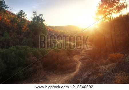 HDR landscape of a valley with pine trees at sunset