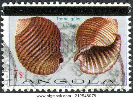 ANGOLA - CIRCA 1974: A stamp printed in Angola (overprint 1981) shows the marine gastropod mollusc Giant Tun (Tonna galea) circa 1974