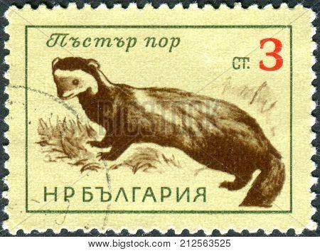 BULGARIA - CIRCA 1963: Postage stamp printed in Bulgarian show the European polecat (Mustela putorius) circa 1963