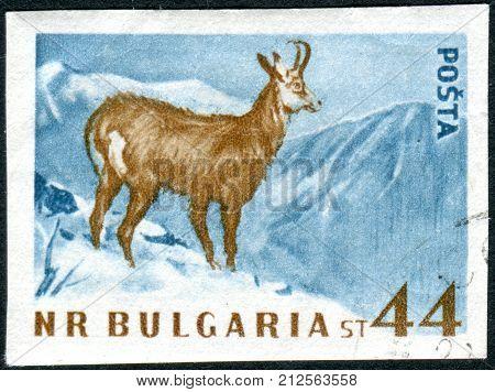 BULGARIA - CIRCA 1958: Postage stamp printed in Bulgaria show the Chamois (Rupicapra rupicapra) circa 1958