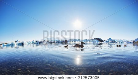 Iceland, Jokulsarlon lagoon, Beautiful cold landscape picture of icelandic glacier lagoon bay, birds in the water