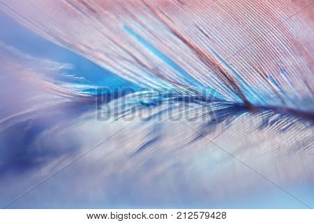 Abstract background with blue feather and reflection. Selective focus.