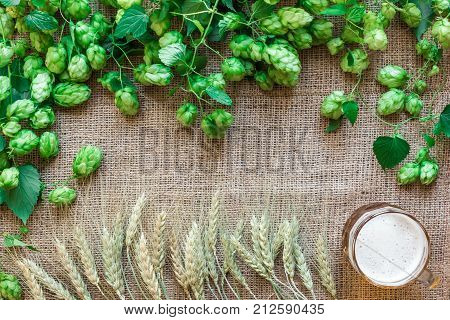 Green Fresh Hops with Wheat and Beer as copy space frame text area on sackcloth background. Flat lay. Still life. Top view