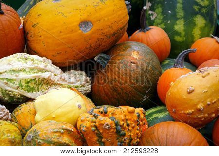 Detail of colorful pumpkins collection on a street autumn market