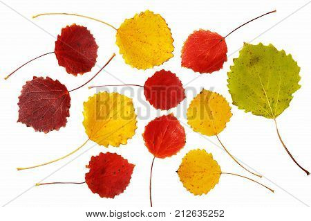 Red green and yellow asp leaves on white background
