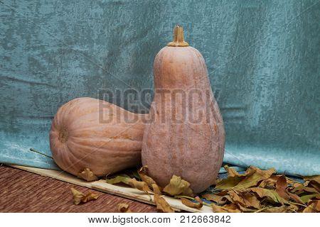 Pumpkin d cor with autumn cracks . Pumpkin in autumn