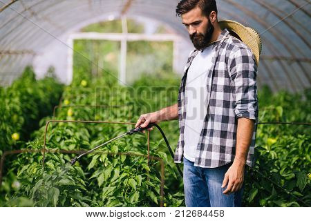 Young farmer protecting his plants spraying with chemicals