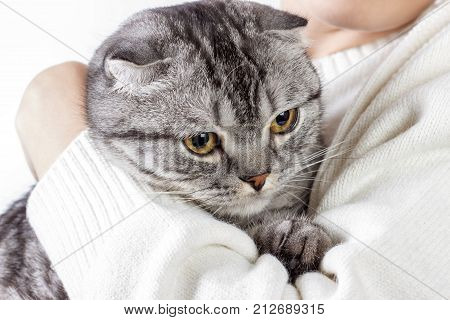 Pets Care. Young woman holding cat home. Cute cat in woman hands. Animal Love. Cat lover. Friendship. Scottish kitten.