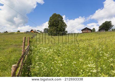 Pasture near the village Markovskaya Verhovazhskogo district Vologda region Russia