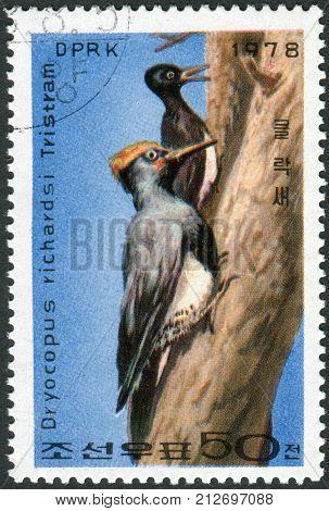 NORTH KOREA - CIRCA 1978: Postage stamp printed in North Korea shows White-bellied Woodpecker (Great Black Woodpecker (Dryocopus javensis)) circa 1978