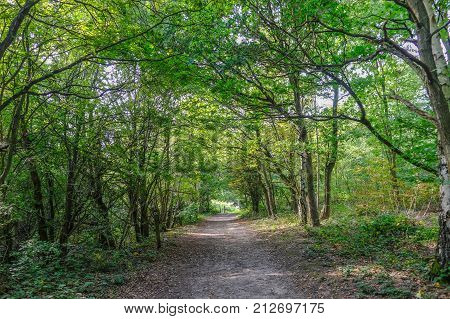 Forest path with trees lining in Essex England. Summer shot with dappled sunlight.