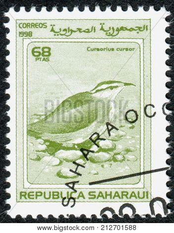 SAHRAWI REPUBLIC - CIRCA 1998: A stamp printed in Sahrawi Republic shows the cream-coloured courser (Cursorius cursor) circa 1998