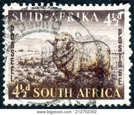 SOUTH AFRICA - CIRCA 1953: Postage stamp printed in South Africa shows Merino Ram and Sheep circa 1953