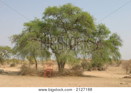 Marking Tree Boxtrap