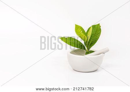 Fresh Organic Herbs Healthy Aroma
