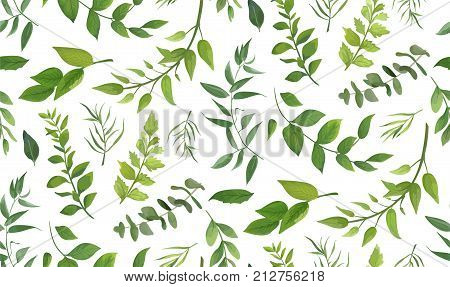 Seamless pattern of Eucalyptus palm fern different tree foliage natural branches green leaves herbs tropical plant hand drawn watercolor Vector fresh beauty rustic eco friendly background on white