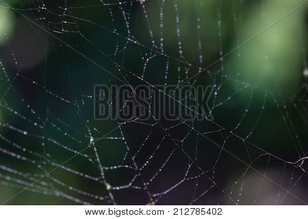 spider web with mroning dew on it.