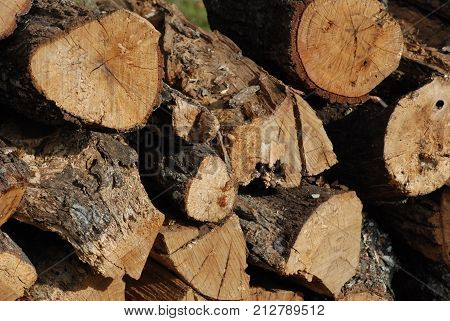 Firewood cut, stacked, and ready to use.