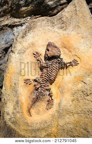 Ancient fossil imprint. Reptile skeleton on surface ground stone. Archeology and paleontology concept. Prehistoric extinct animal dinosaur.
