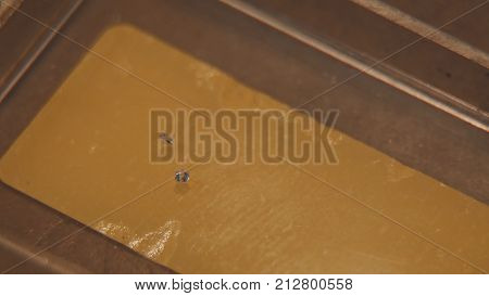 Gold granules. Gold granules. Gold and silver weighed in the balance. manufacture of jewellery 4K