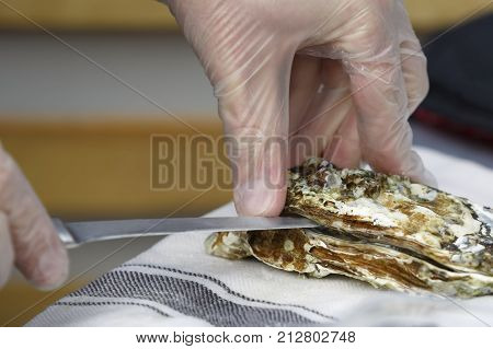 The cook opens the oyster with a knife